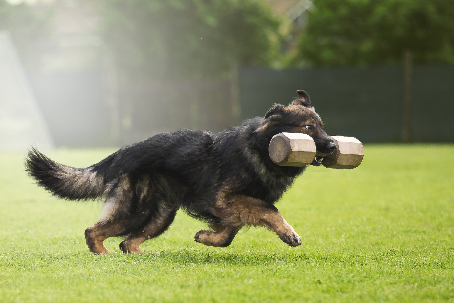 Pelo Lungo Pelo Corto Questione Di Geni Sporting Dog