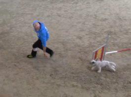Finale CSEN agility 2018. Uomo e cane che corrono fra gli ostacoli